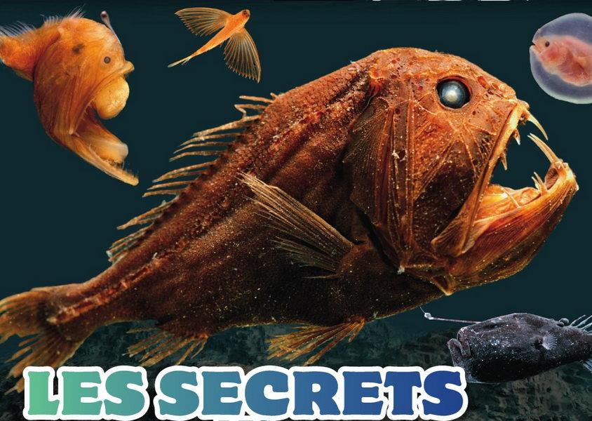 créature vivant ocean grande profondeur
