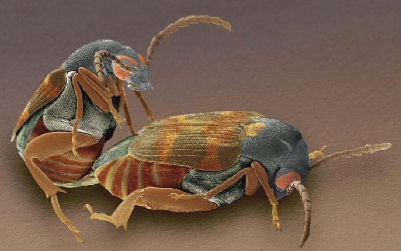 plan te ga a animal arthropodes entomologie le monde des col opt res. Black Bedroom Furniture Sets. Home Design Ideas