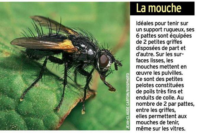Planète GAÏA -> Animal -> Arthropodes -> Entomologie -> Le