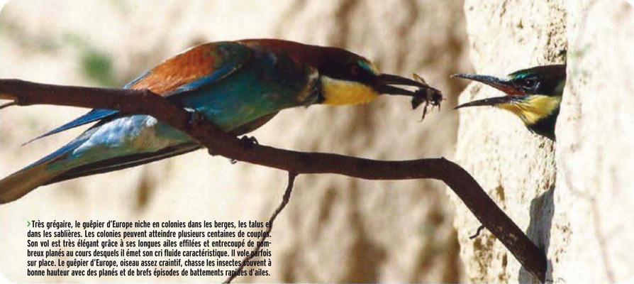 serre a insectes pour enfant