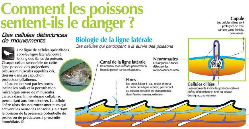 comment devenir ichtyologie